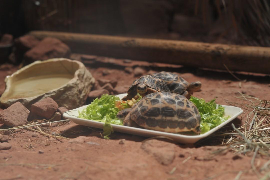 Malyslon - Une journée au zoo